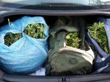 CBŚP zlikwidowała dwie plantacje marihuany pod Olsztynem [ZDJĘCIA]