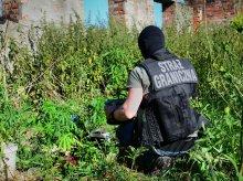 Kolejna plantacja marihuany w warmińsko-mazurskim