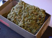 Miał w garażu 20 kilogramów narkotyków