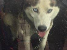 Ten pies błąkał się przy ul. Bałtyckiej. Poznajesz go?