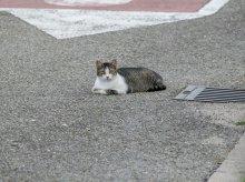Absurdalny proces z kotem w roli głównej zakończony uniewinnieniem