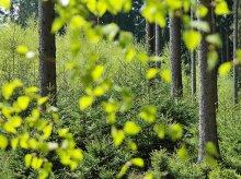 Zlikwidują olsztyński oddział Regionalnej Dyrekcji Ochrony Środowiska
