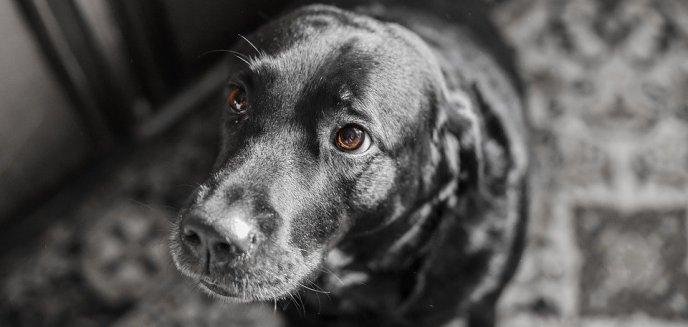 Połamał mopa na ciele swojego psa. Jest wyrok dla okrutnego właściciela