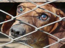 Masowe porzucanie zwierzaków w Olsztynie. Tak zaczynamy okres urlopowy?