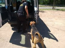 Pies błąkał się po ulicy Leśnej. Kolejne porzucenie przed wakacjami?