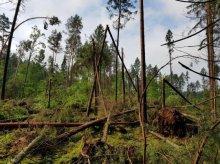Trąba powietrzna doszczętnie zniszczyła las