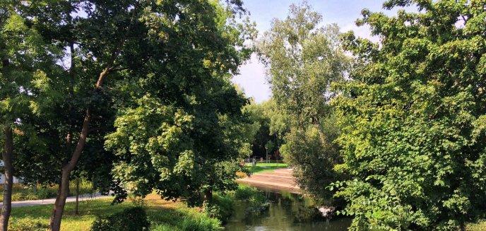 Posadzą drzewa, by zazielenić Olsztyn. Na początek przy skrzyżowaniu na Jarotach