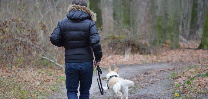 Nie spuszczaj psa ze smyczy. Rusza akcja szczepienia lisów