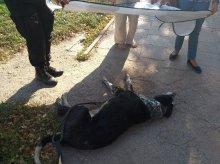 Znęcał się nad psem. Interweniowali przypadkowi świadkowie