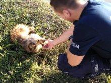 Na trawniku leżał potrącony i przestraszony kundelek