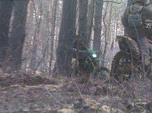 Crossami po lesie. Leśnicy ukarali kierowców