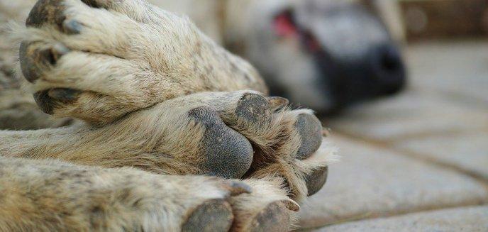 W Olsztynie powstał zespół do spraw ochrony zwierząt