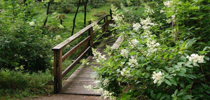 Artykuł: Leśne Arboretum w Kudypach już otwarte
