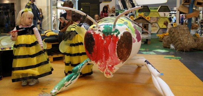 Artykuł: Pszczele lekcje w Galerii Warmińskiej hitem października