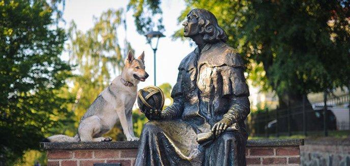 Artykuł: Raz jeszcze zawalczą o psią strefę w Olsztynie
