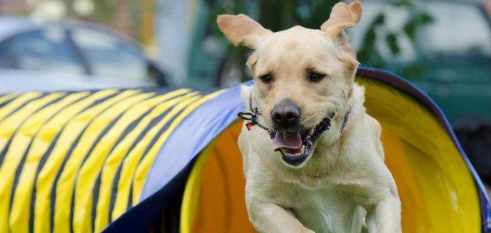 Artykuł: Zbudują dog park ''Psia Polanka''