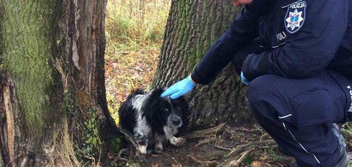 Artykuł: Pomogli wyczerpanemu psiakowi