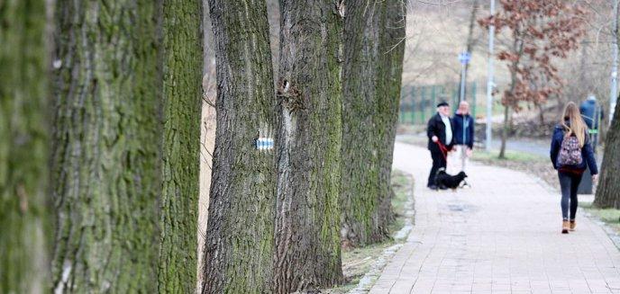 Artykuł: Prezydent wstrzymuje wycinkę drzew nad jez. Długim