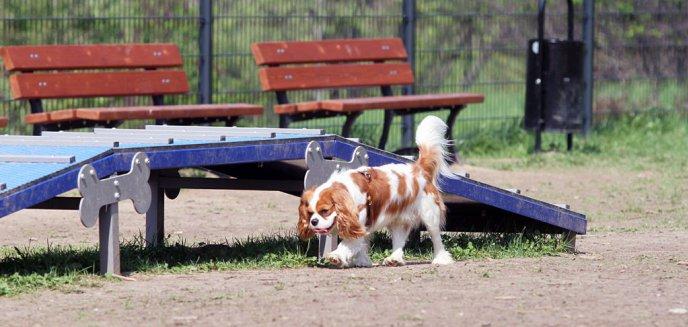 Artykuł: Psia polanka czeka na czworonogi [ZDJĘCIA]