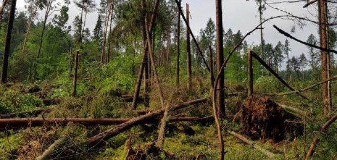 Artykuł: Trąba powietrzna doszczętnie zniszczyła las