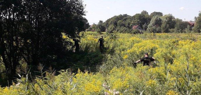 Artykuł: Poszukiwania zaginionego 85-latka. Policjanci przeczesują okolice toru motocrossowego przy Lubelskiej