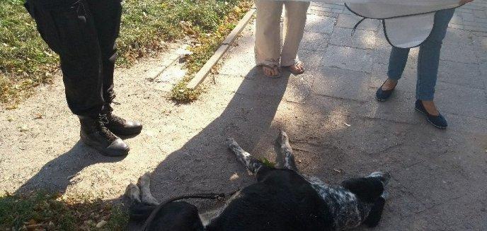 Artykuł: Znęcał się nad psem. Interweniowali przypadkowi świadkowie