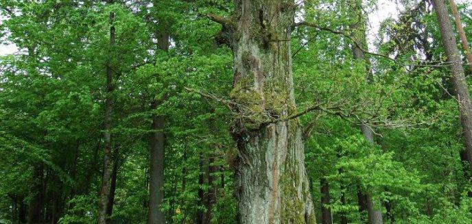 Artykuł: Leśnicy przegrali walkę z aeroklubem. Z Dajtek zniknie 21 hektarów lasu