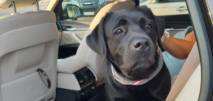 Chcieli 1 tys. zł za oddanie zaginionego psa. Teraz grozi im więzienie