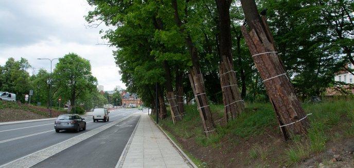 Artykuł: Wrocław lepiej zadba o miejskie drzewa. Jak sytuacja wygląda w Olsztynie?
