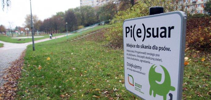 W Olsztynie stanęły ''Pi(e)suary'' [ZDJĘCIA]