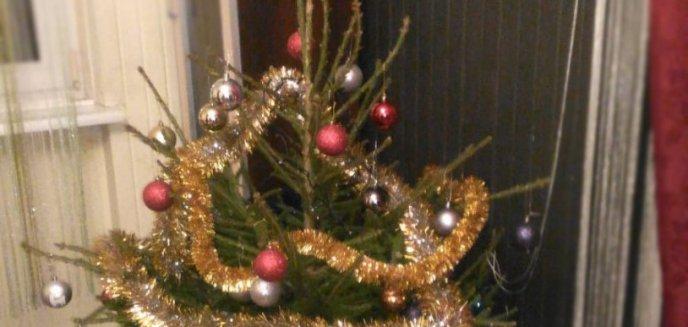Artykuł: Złodzieje poczuli atmosferę świąt. Ich łupem padły... dwie choinki