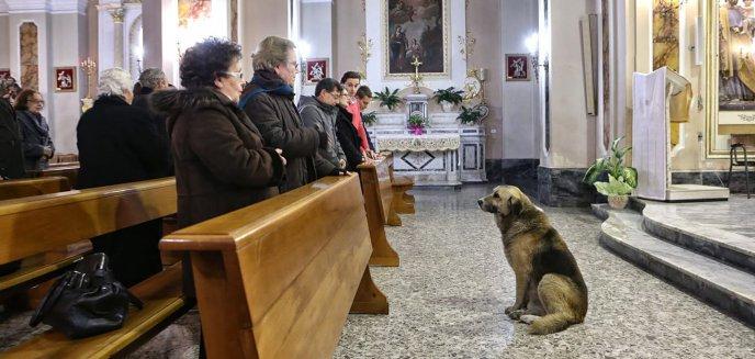 Tego jeszcze w Olsztynie nie było! Podczas mszy ksiądz przedstawi wiernym... psy do adopcji