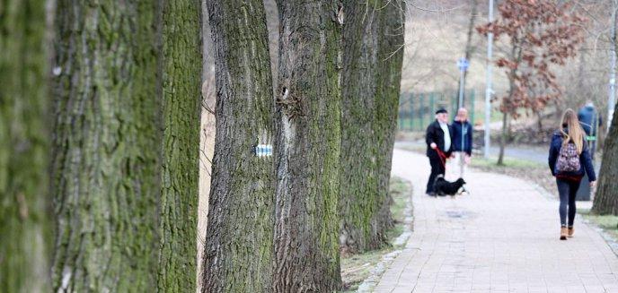 Artykuł: Nowo posadzone drzewa nad jez. Długim znów poszły pod topór. Kto jest temu winny?