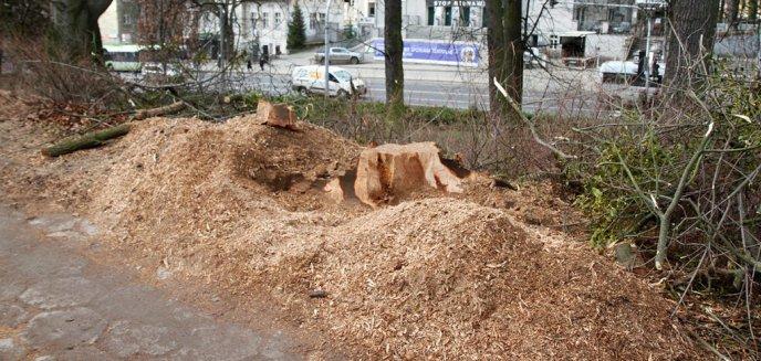 Usunęli 40 drzew na al. Piłsudskiego, bo będzie tamtędy jechał tramwaj. Nikt nie przyznaje się do wycinki [AKTUALIZACJA]