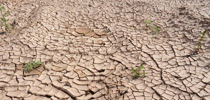 Artykuł: Susza rolnicza dotarła na Warmię i Mazury. Czy grozi nam wzrost cen i brak wody w kranach?