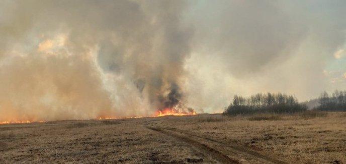 Artykuł: Nie wypalajmy traw! W powiecie olsztyńskim w kwietniu strażacy mieli już 80 takich interwencji