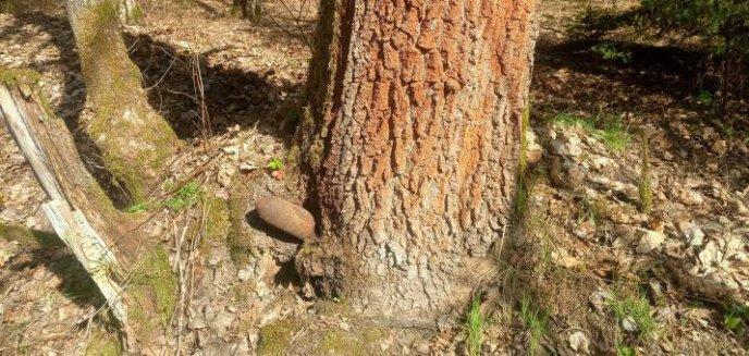 Artykuł: Niebezpieczne znalezisko w lesie pod Olsztynem. To już trzecie w tym roku