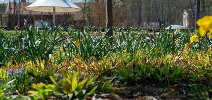 Artykuł: W Olsztynie powstają łąki kwietne i hotel dla owadów. Wiemy, w których miejscach