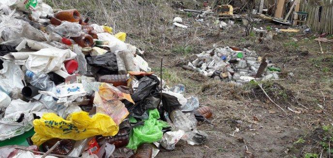 Artykuł: Mamy odpowiedź ZDZiT-u ws. porządków na skarpie przy Łynie w lesie miejskim