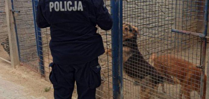 Areszt dla zarządcy schroniska w Radysach. Usłyszał zarzut m.in znęcania się nad zwierzętami