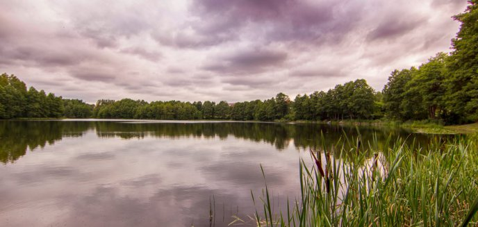 Artykuł: Strażacy wyłowili zwłoki dzika z olsztyńskiego jeziora