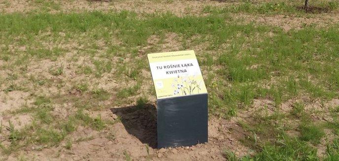 Artykuł: Nieporozumienie z tabliczką ''Tu rośnie łąka kwietna''. Czytelnik: ''Łąki tu nie ma, tylko skrzyp''