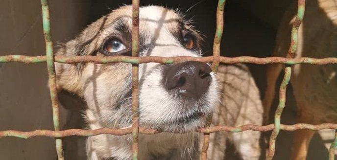 Artykuł: ''To zbyt absurdalne, żeby było prawdziwe''. Dramat psów w Olsztynku [ZDJĘCIA]
