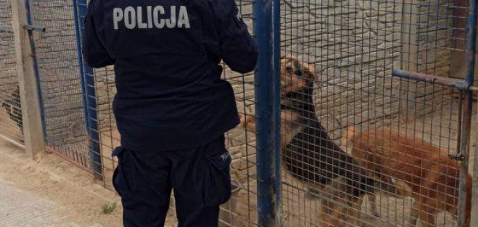 Artykuł: Po aferze w Radysach Ministerstwo Rolnictwa chce poprawić los zwierząt w schroniskach