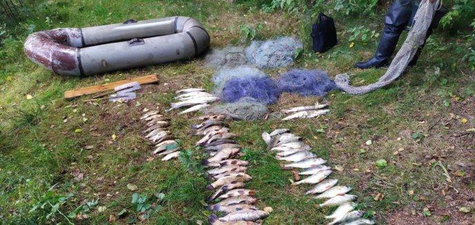 Artykuł: Złowił 31 kg ryb w rezerwacie. Kłusownik zatrzymany na gorącym uczynku [ZDJĘCIA]