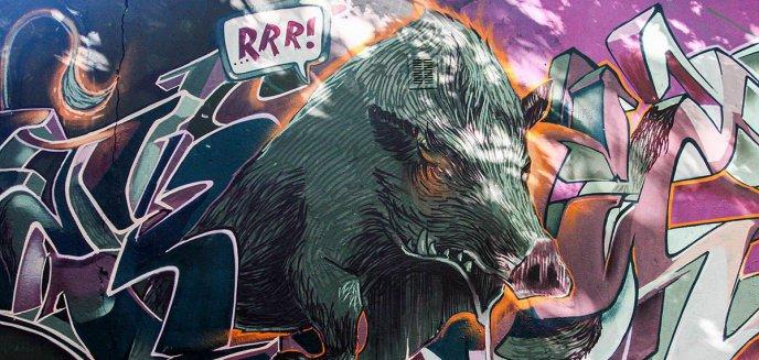 Oryginalne graffiti na olsztyńskim Podgrodziu. W roli głównej... dzik [ZDJĘCIA]