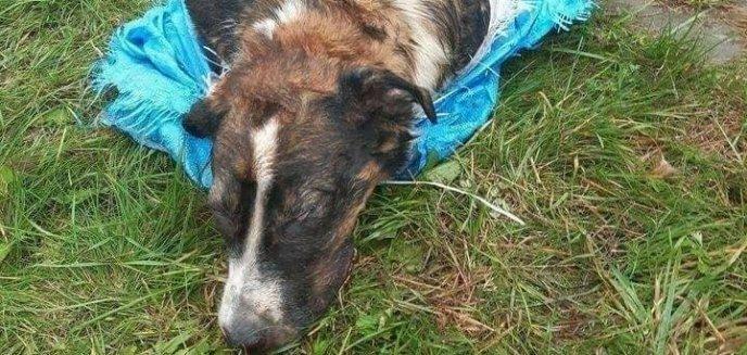 19-latek bestialsko zamordował szczeniaka pod Pasłękiem. Usłyszał zarzuty