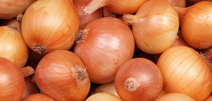 Artykuł: Uprawa cebuli