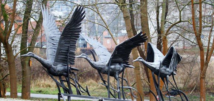 Artykuł: ''Warmińskie żurawie'' stanęły w centrum Olsztyna [ZDJĘCIA]