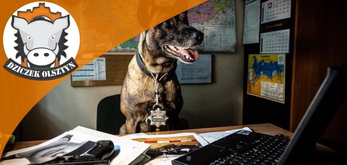 Artykuł: Olsztyński pies policyjny został gwiazdą internetu